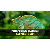 Интересные забивки - Хамелеон