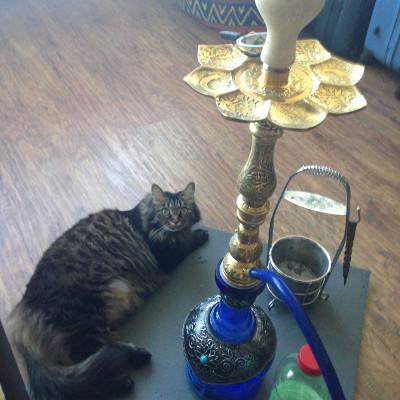 Курить будем на турке, пока ставил - на коврик успело примоститься коте, которое видимо фшоке от микса.